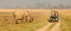 corbett_safari