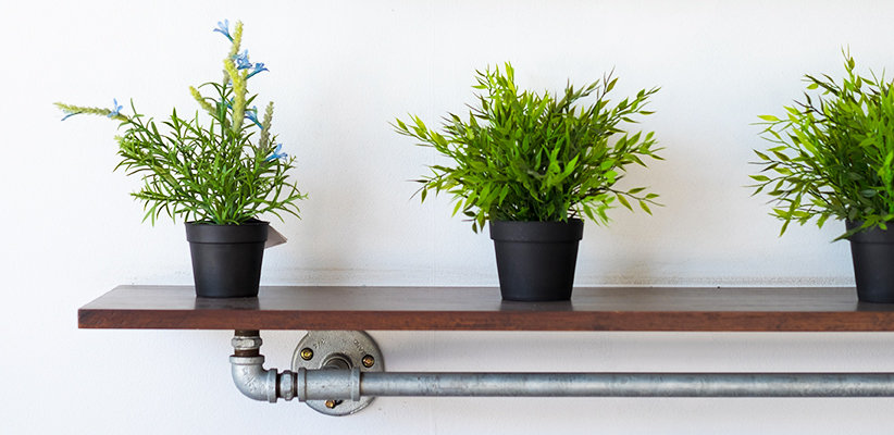 house-plants3
