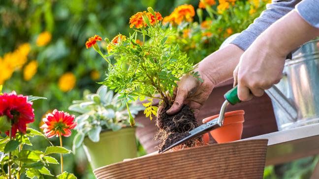 what-to-do-in-the-garden-in-july-136407065174303901-160630101606