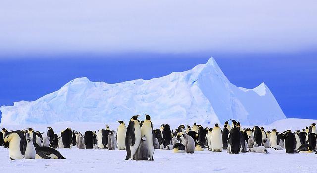 antarctica-thumb