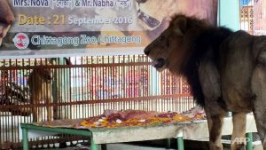 bangladesh-zoo-lion-wedding