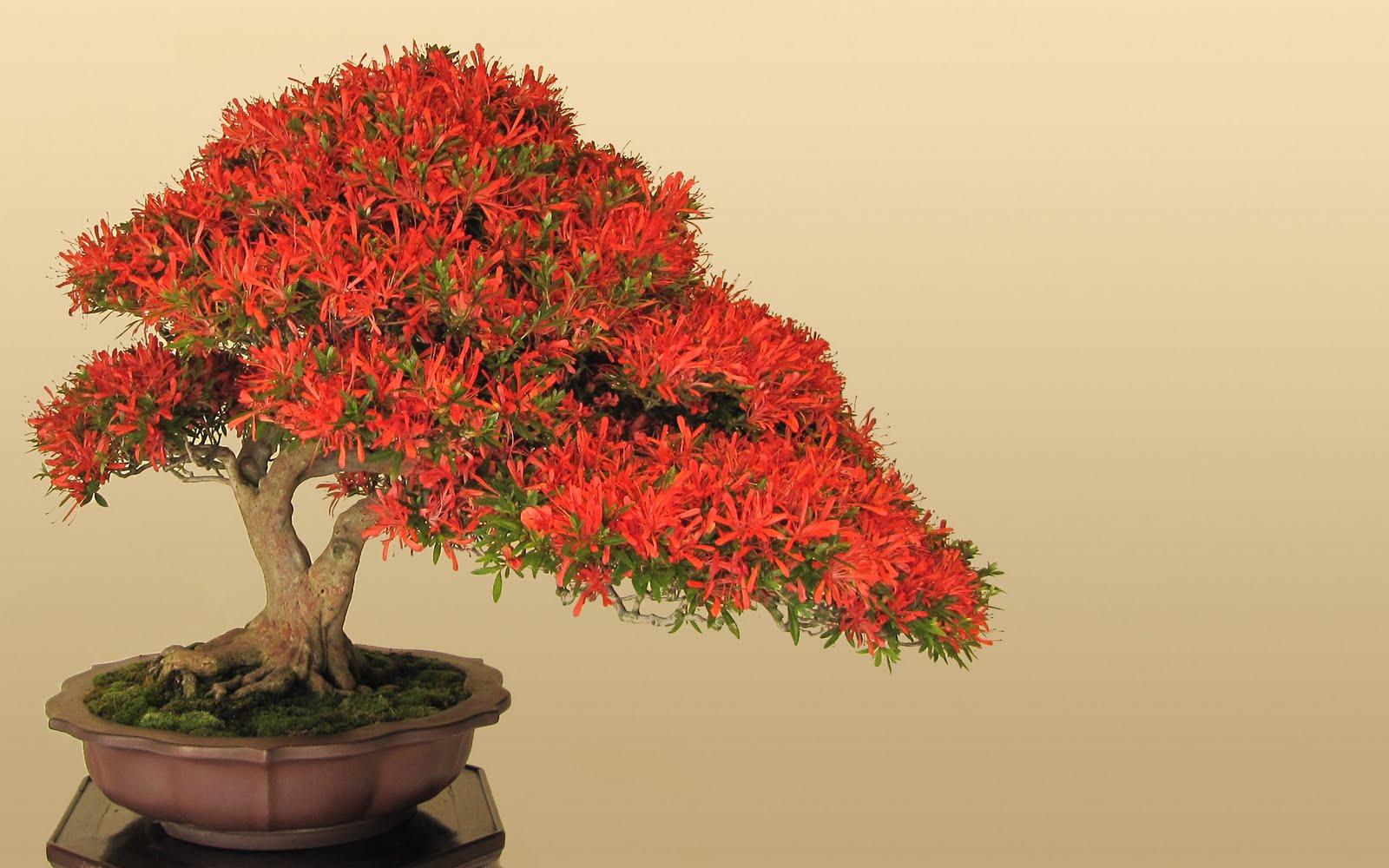 new bonsai