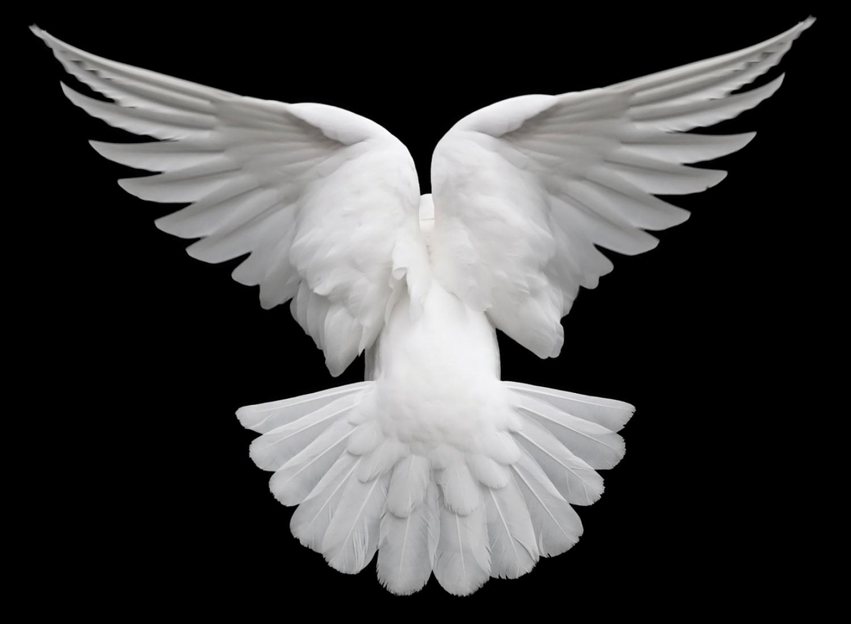 item_unfolding-like-a-birds-wings_49970