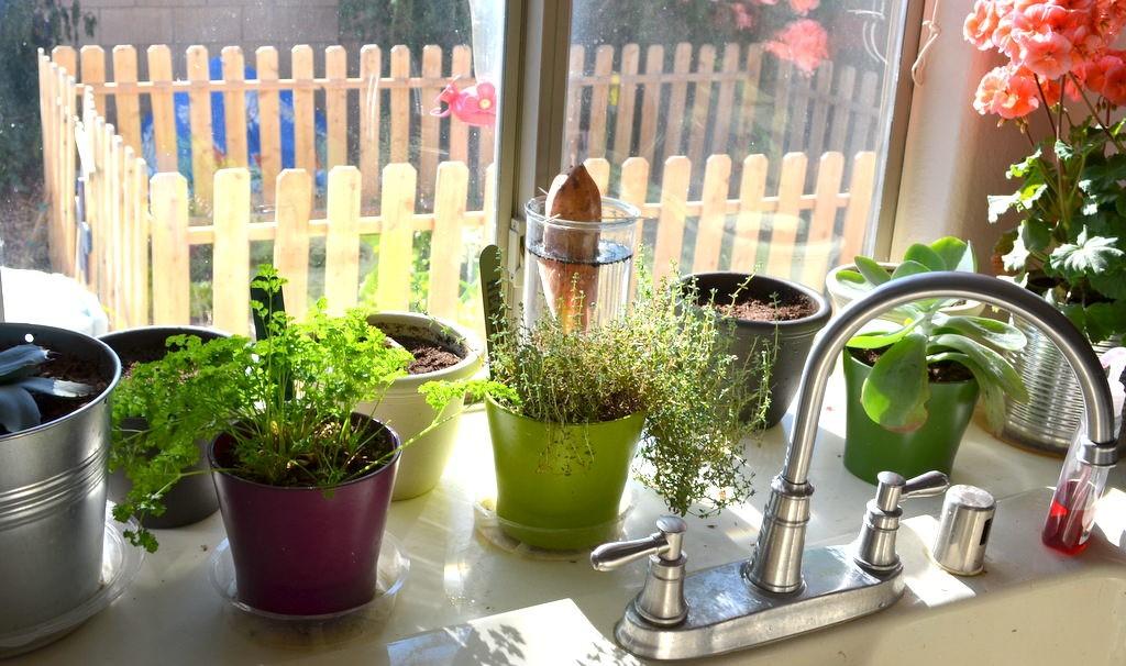 best-herbs-for-kitchen-1024x606