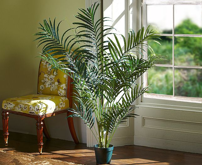 indoor-plants-areca-palm